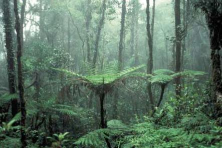 ecossistema-4.jpg
