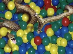 Cobras Piscina